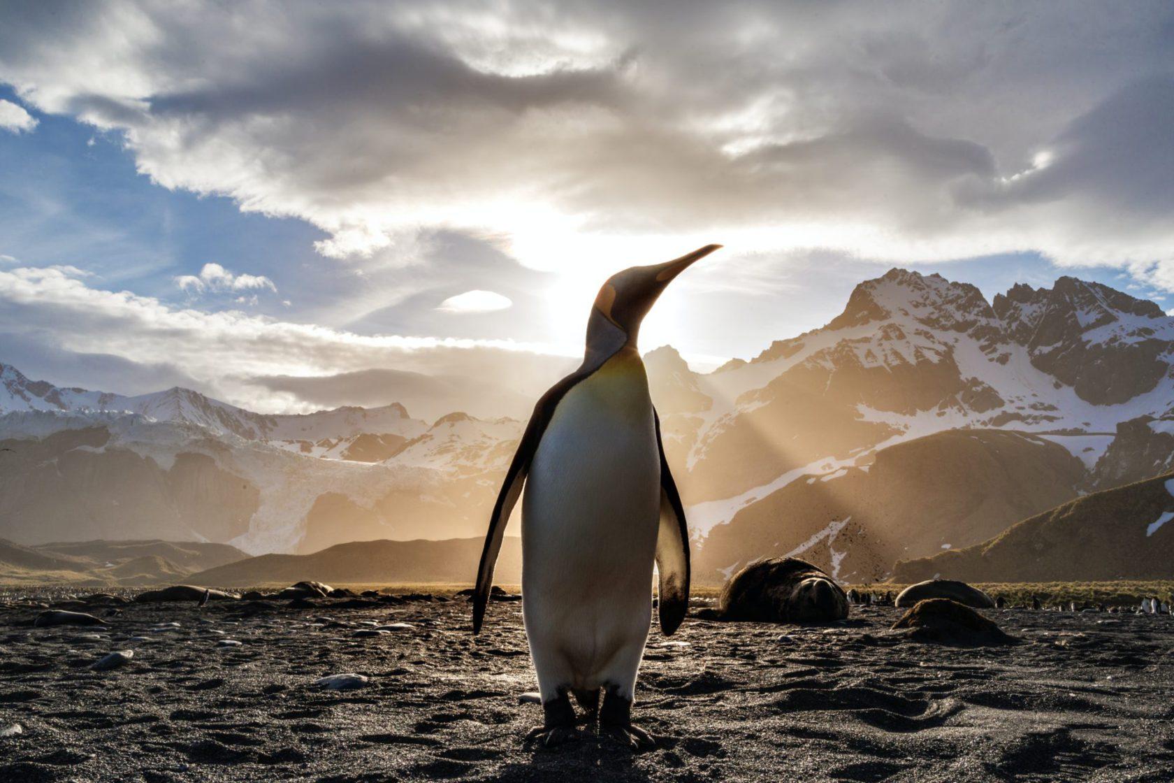 [書評]Linuxのしくみ ~実験と図解で学ぶOSとハードウェアの基礎知識