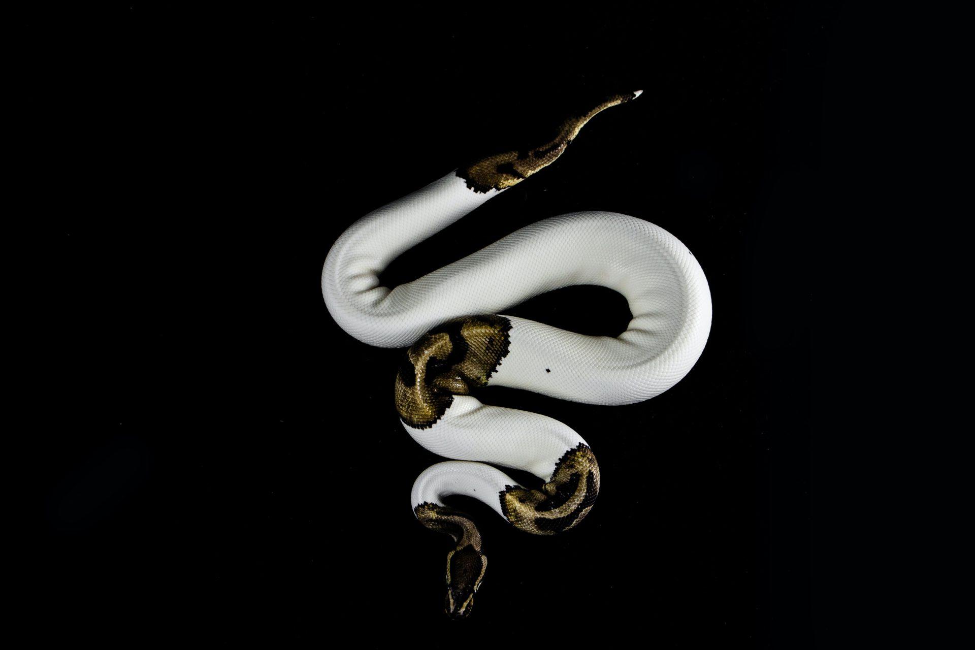 typed python